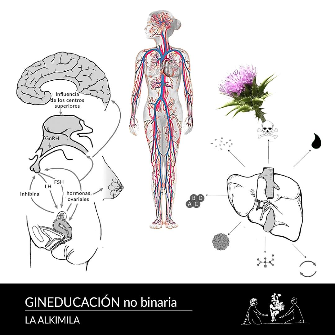 Imágenes anatómico-ginecológicos