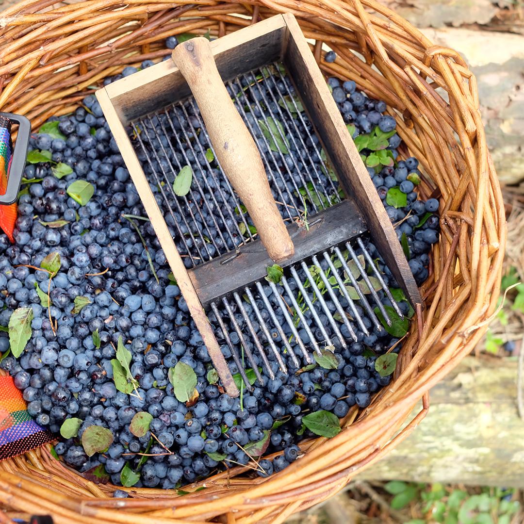 «La semana del Mirtilo»: relatos & recetas con sabor a dulzura veraniega